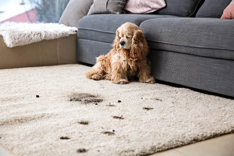 How To Keep Your House Clean With A Dirty Dog